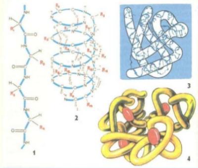 Alimlər zülalın üçölçülü strukturunu kəşf ediblər