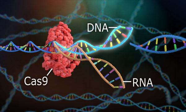 Molekulyar bioloqlar CRISPR/Cas9 genom redaktorunun yeni formasını yaradıblar