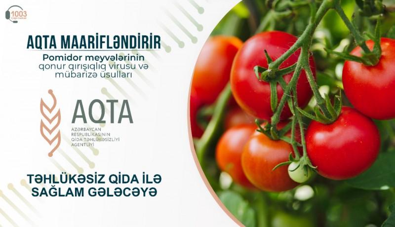Pomidor meyvələrinin qonur qırışıqlıq virusu və mübarizə üsulları