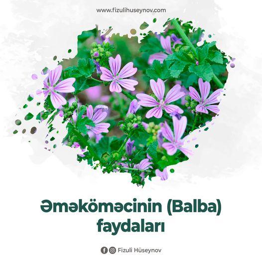 Həkim-fitoterapevt: