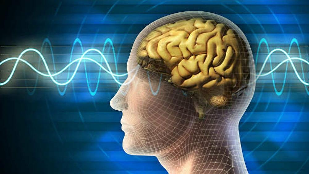 Alimlər müasir insan beyninin kiçilməsi səbəbini aydınlaşdırıblar
